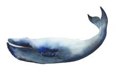 whale_03_web