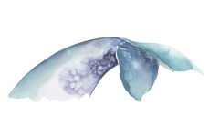 whale_04_web