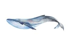 whale_07_web