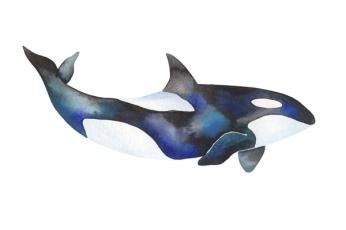 whale_08_web