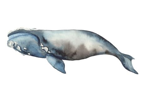 whale_10_web