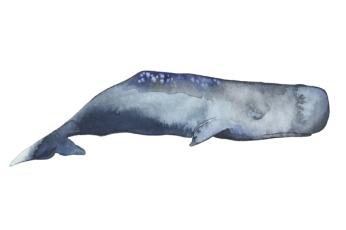 whale_11_web