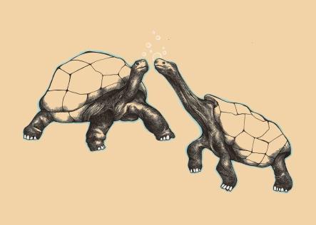 13x9_turtles_resize