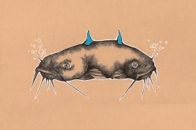 for_web_catfish